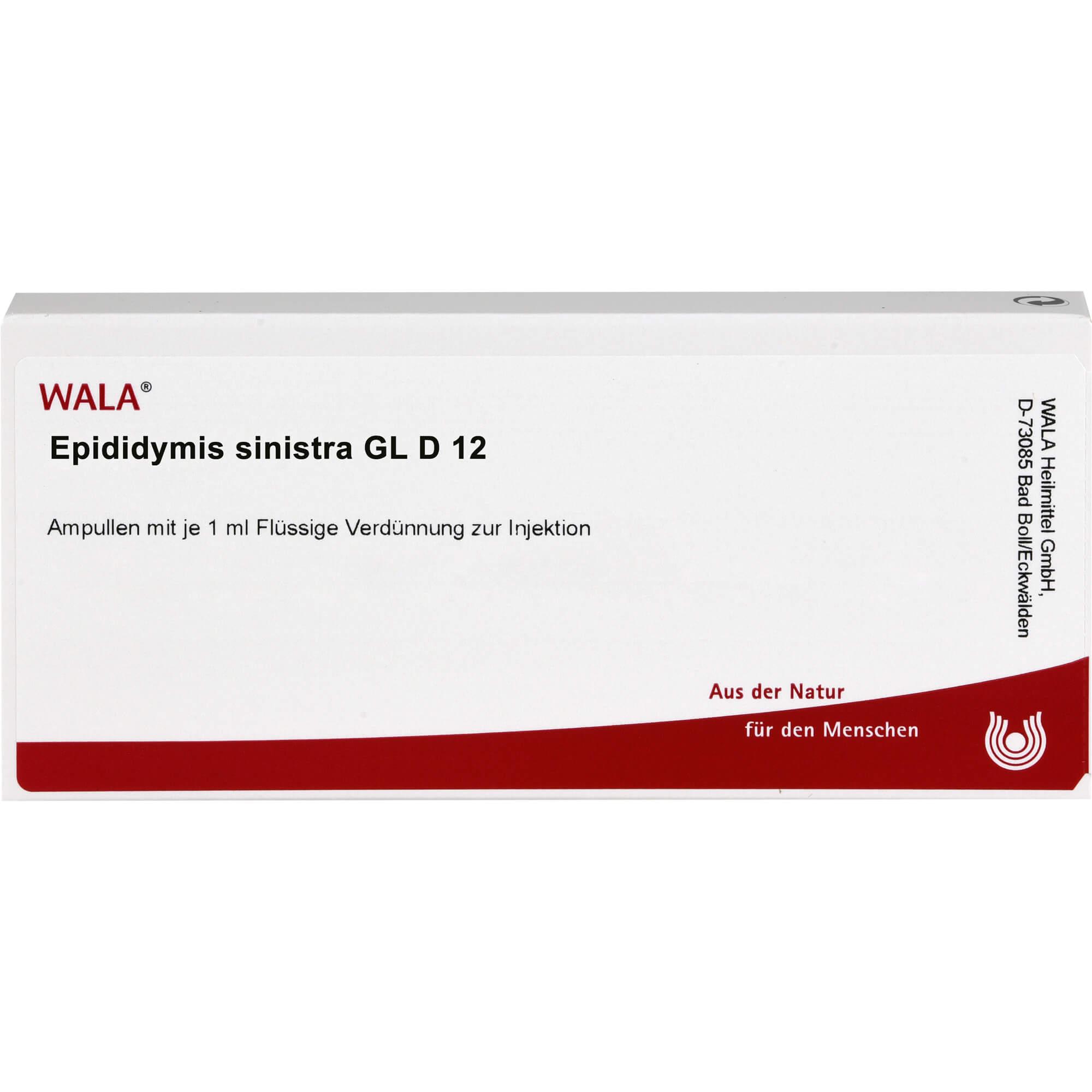 EPIDIDYMIS-sinistra-GL-D-12-Ampullen